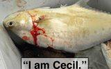 cecil-fish