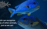 fish-recognize-faces