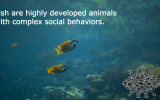 fish-social-behavior
