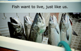 fish-want-to-live