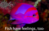 fishhavefeelings-too