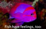 fishhavefeelings-too