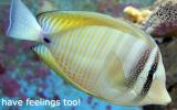 fishhavefeelings-too2