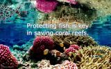 saving-coral-reefs