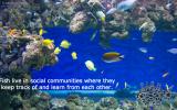 social-fish