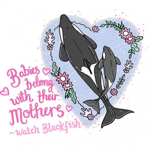 Babies Belong With Their Mothers, Watch Blackfish - Jessica Henderson