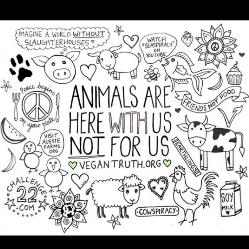 Animals Are Here With Us, Not For Us - Jessica Henderson