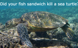 turtle_bycatch
