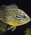 yourpage_michaelfish